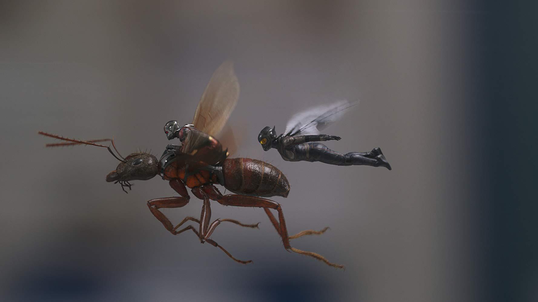 """""""Ant-Man and the Wasp"""": Khi mỹ nhân ra tay cứu anh hùng trong cuộc chiến vắng bóng kẻ ác - Ảnh 5."""